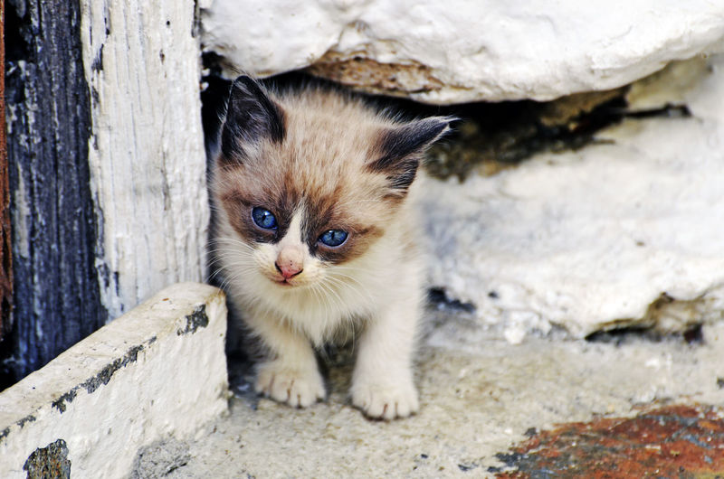 Close-up of kitten standing by rock