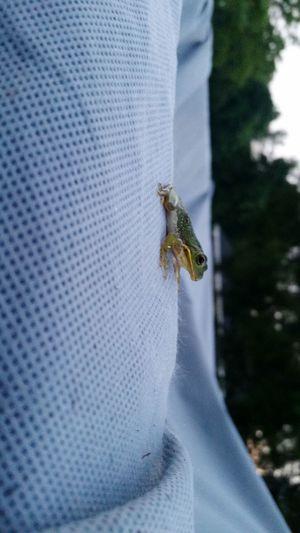 Free. Frog