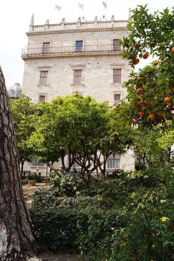 Architecture Comunidad Valenciana Comunitat Valenciana Day Espana-Spain España🇪🇸 Generalitat Generalitat Valenciana History Naranjos Orange Tree Regne De Valencia Reino De Valencia