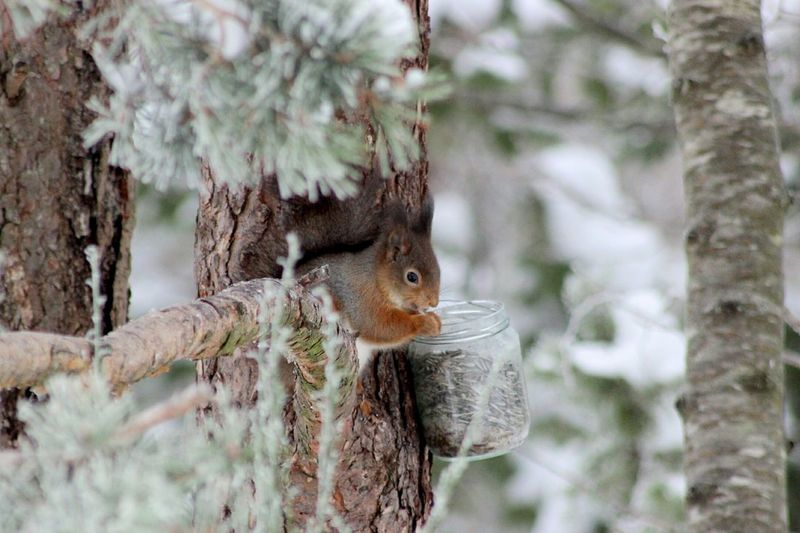 One Animal Animal Themes Tree Squirrel Animals In The Wild Coldoutside Animal Wildlife Nature Outdoors Frozen Cold Temperature Winterwonderland Snow Premium Collection Eyem Gallery Nature_collection Beauty In Nature Animal_collection Premium Premium_collection