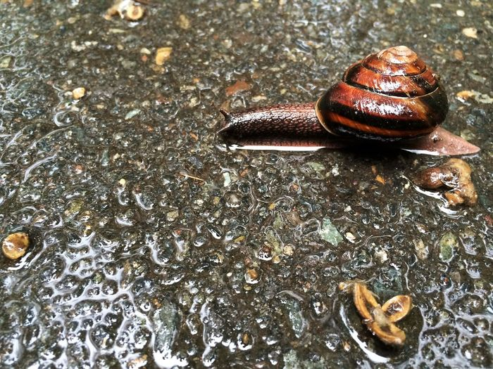 Shiny Snail Close-up Day Gastropod Nature Outdoors Slimy Snail Wildlife