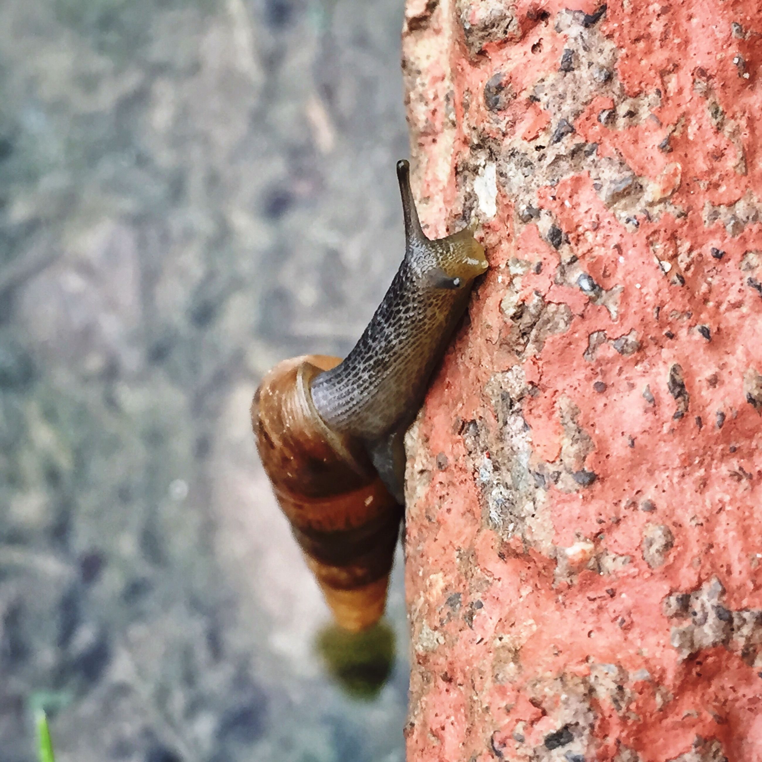 close-up, one animal, focus on foreground, animal themes, animals in the wild, rusty, wildlife, metal, textured, outdoors, snail, selective focus, day, no people, animal shell, nature, wall - building feature, weathered, old, metallic