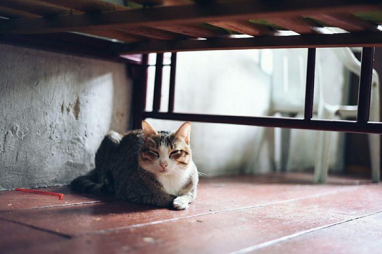 Cute Pets Cat