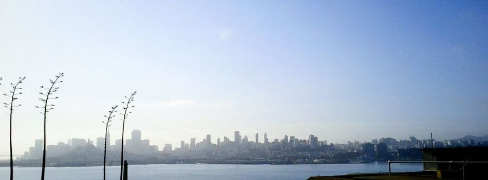 San Francisco Skyline from Alcatraz at Sunrise after spending the night. Agave Flowers Panoramic Photography