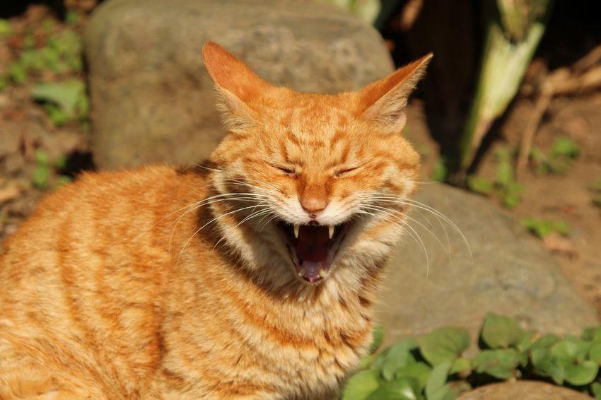Japan ShoutOut Animal Animal Themes Cat Enoshima