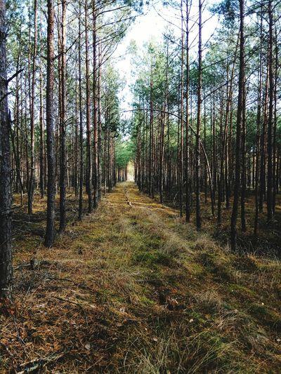 Forest Goldpolishautumn Tree Forest Landscape