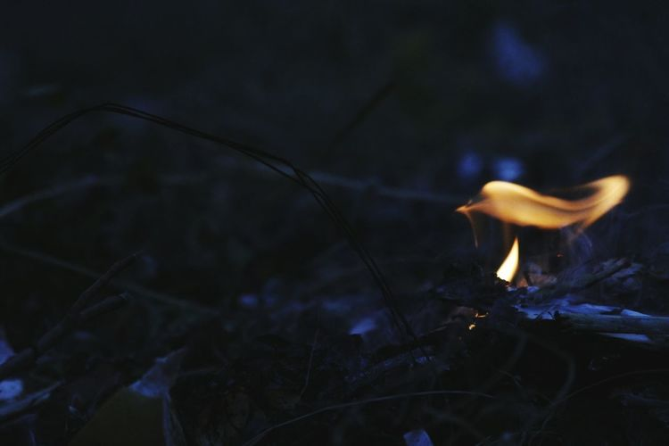 Fire Flame Canon1200DPhotography Eveningshot Formationofbird Perspectives On Nature