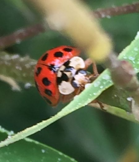 Spring has Sprung NOW Lady Bug FUN