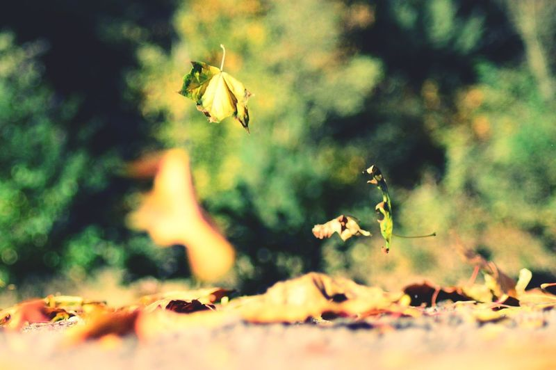 Leaf Leafs Photography Flying Tree Animal Themes Close-up Plant Fallen Fall