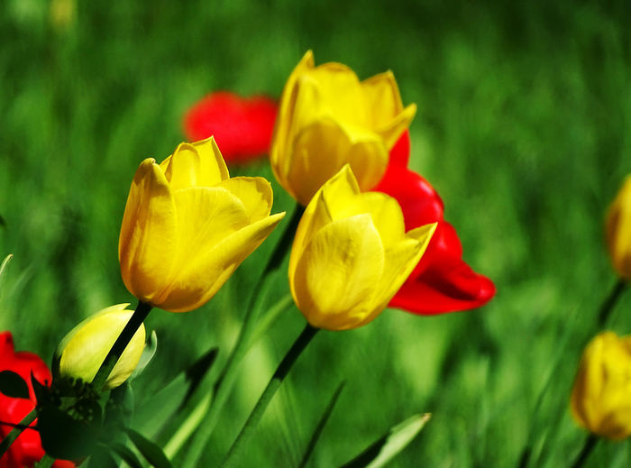 Waiting for spring Nature Flower Collection Spring Flowers Nature_collection Flower Head Flower Day Lily Yellow Petal Springtime Tulip Daffodil Close-up Blossom Spring