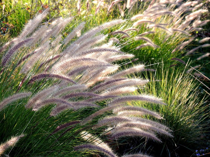 Growth Plant Nature Beauty In Nature No People Day Field Land Green Color Outdoors Sunlight Grass Close-up Tranquility High Angle View Wind Botany Scenics - Nature Leaf Environment Timothy Grass Palm Leaf Fine Art Photography.