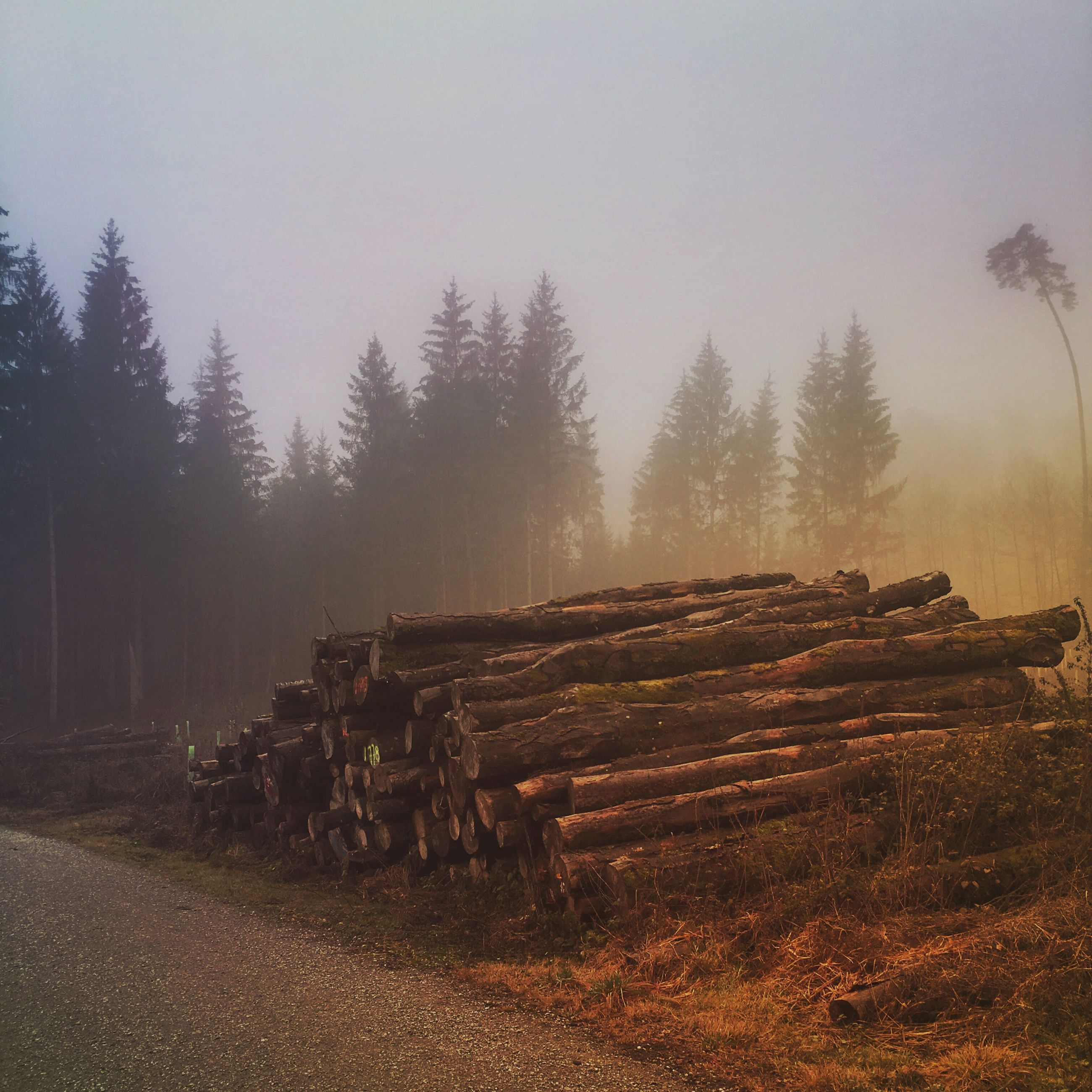tree, landscape, field, tranquility, clear sky, tranquil scene, sky, nature, wood - material, rural scene, abandoned, outdoors, day, no people, non-urban scene, old, log, firewood, in a row, scenics
