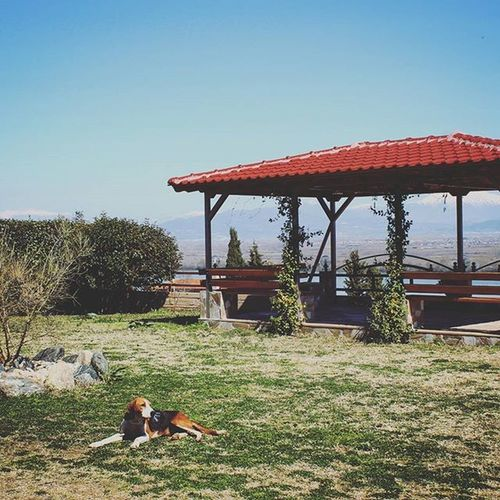 Frankie says relax! A Freezing morning in LakeKerkini ,the view is from the front of the hotel we stayed. Relaxing with the owner's dogs & cats.. Catherine_d_milosevich_photography Laketrip Lakeview Discovergreece Serres Gr Travelstory Chronicleofatravel