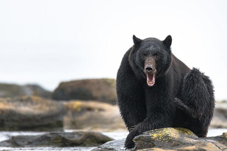 Black dog on rock