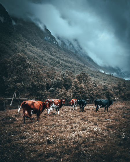 Horses on a landscape