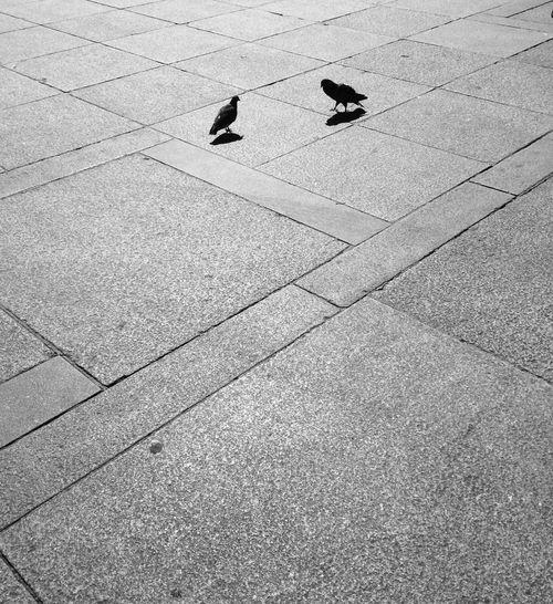 "1518 (aka ""minimal love"") No People Day EyeEmNewHere Monochrome Streetphotography Blackandwhite Minimalism Minimalmood"