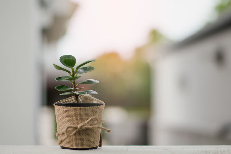Close-up of potted plant on retaining wall