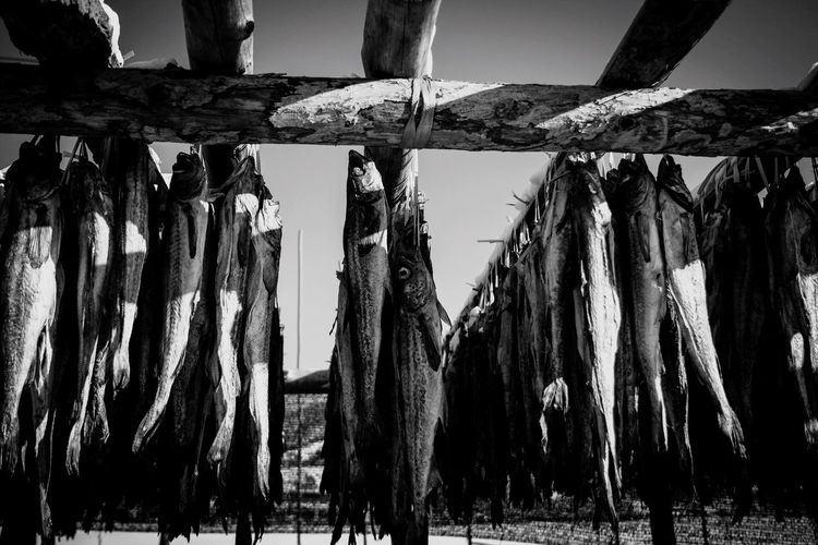 Dried Pollack South Korea Fish In A Row Sky Outdoors Group Of Objects Day Tranquility In Front Of Nature Tranquil Scene No People Spiked Medium Group Of Objects Scenics Large Group Of Objects Arrangement