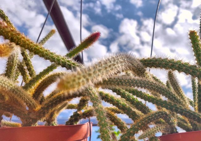 Cactus Cacti Cactusporn Cactusclub Cactus Garden I Love Cactus EyeEm Cactus