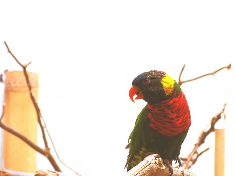 Cheese! Check This Out Taking Photos Hanging Out Hello World Zoo EyeEm Nature Lover Bird Parrot Parrot Lover Parrot Zoo