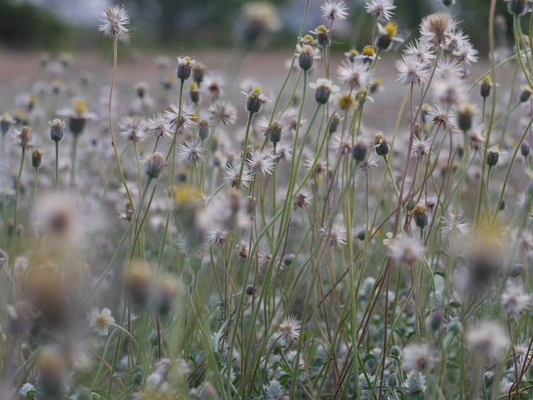 Nature Growth Close-up Plant Outdoors No People Beauty In Nature Flower Day Grass Grassland Beauty In Nature Nature