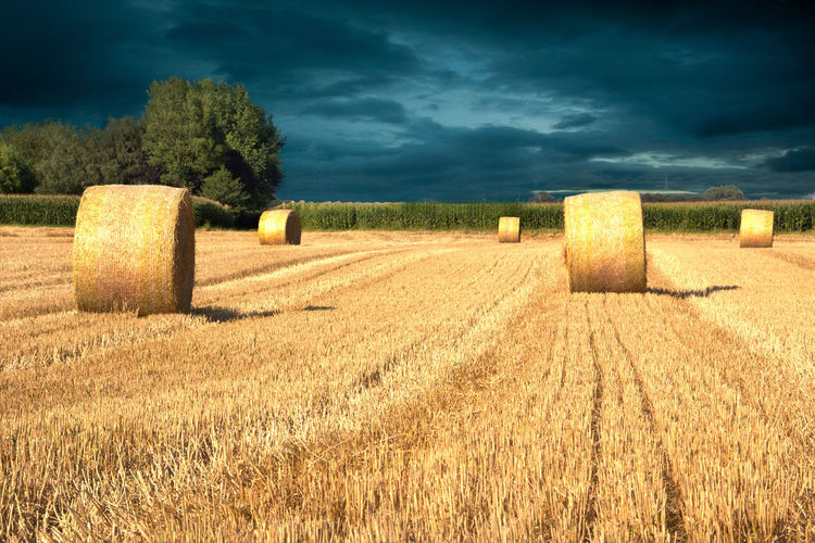 Agriculture Bale  Beauty In Nature Cloud - Sky Day Dramatic Sky At Sunset Time Field Grass Hay Hay Bale Landscape Nature No People Outdoors Rural Scene Scenics Sky Tranquility Tree