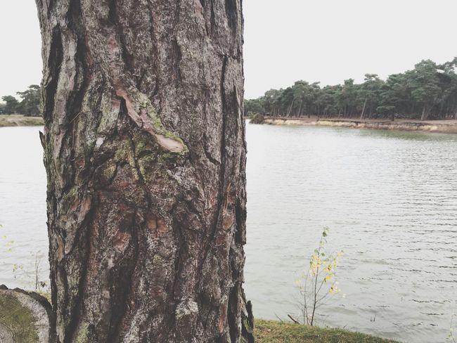 Fall Autumn Leaves Leaves Wood Landscape River Water Nature Trees Autumn Beautiful Forrest Safari Sand Island Lake