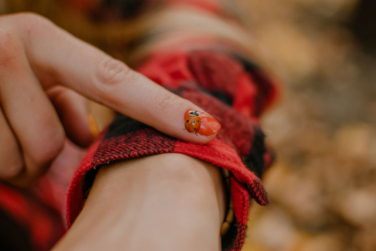 Close-up of woman hand ladybug