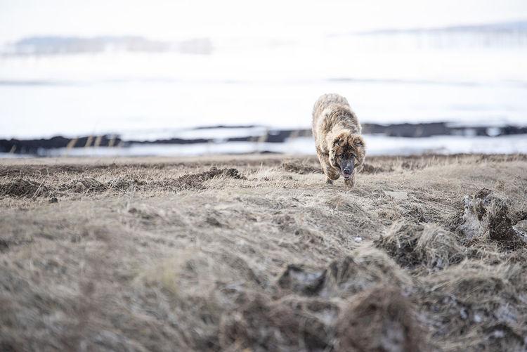 View of animal on beach