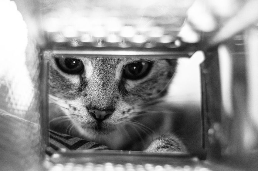 Abstract Photography Patra Evan Black And White Friday Cats Domestic Cat Feline No People One Animal Photography
