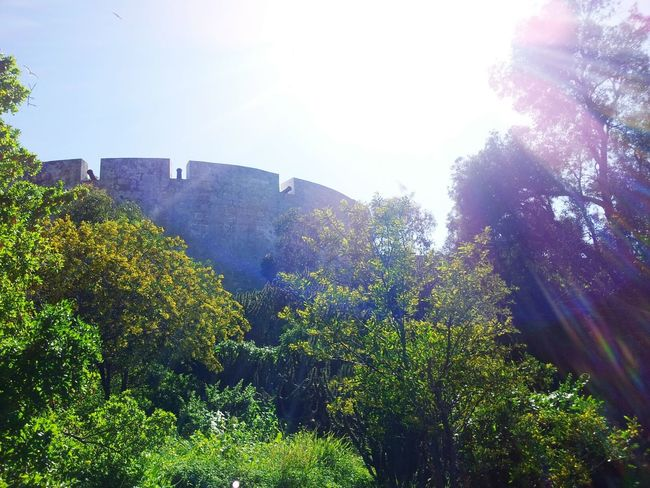 Nature Sunlight Tree Trees Castle Castle Walls Sun Beauty In Nature Beatiful Nature No People Castle View  EyeEmNewHere