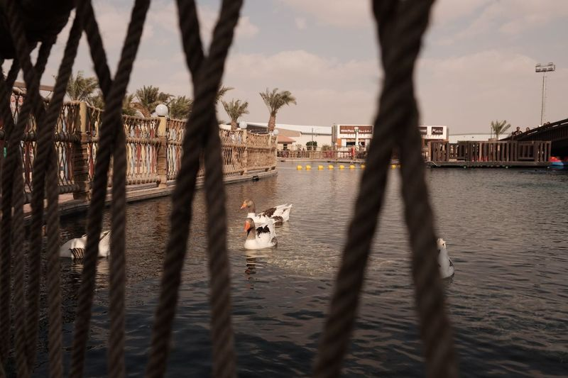 Duck duck ka ng duck duck River Dove Doha Qatar Ducks Duck Bird EyeEm Selects Tree Nature Plant Sky Shadow Water Sunlight Beach Cloud - Sky Day Land Built Structure Real People Sand Architecture Focus On Background Sea Outdoors City