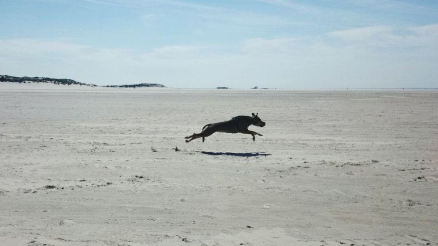 Beach Sand One Animal Dog Sky Animal Themes Domestic Animals Beauty In Nature Dog Runs Beach Sand One Animal Animal Themes Dog Sky Dogs Of EyeEm Dogslife Dog Life Dog Days Dog Love Doglover Cloud - Sky