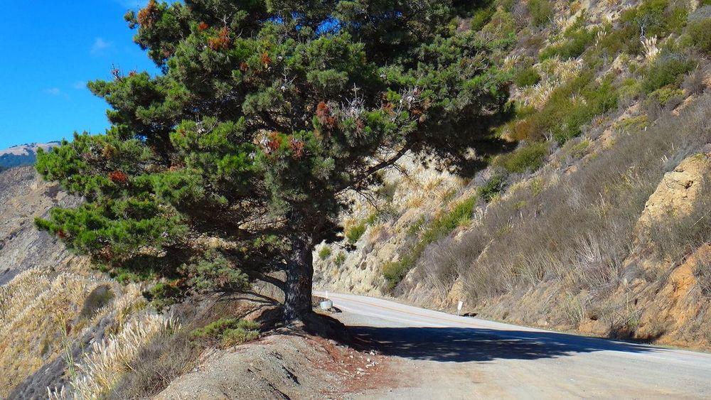 HIGHWAY ONE BIG SUR CALIFORNIA Beauty In Nature Blue Day EyeEm Team Green Color Growth Idyllic Landscape Nature No People Non-urban Scene Outdoors Pacific Ocean Plant Road Road Scenics Sea Sky Sunlight Sunny The Way Forward Tranquil Scene Tranquility Tree
