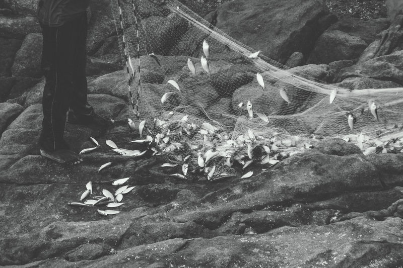 Abundant sardine fishery. Abundance Beauty In Nature Black & White Black And White Blackandwhite Branch Day Fish Fishery  Fishing Growth Messy Monochrome Photography Nature No People Non-urban Scene Outdoors Plant Scenics Tranquil Scene Tranquility Vacations Valley