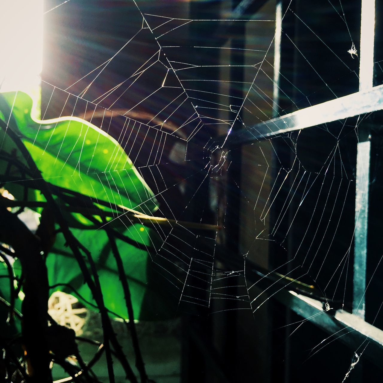 CLOSE-UP OF SPIDER WEB IN THE BACKGROUND