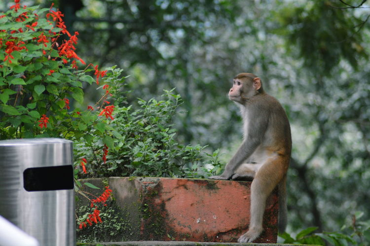 Monkey Relaxing On Wall