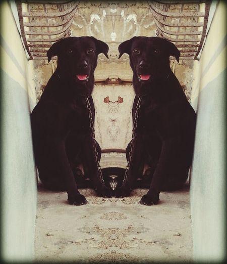 Freak Show los gemelos First Eyeem Photo Dailyphoto Dogstagram