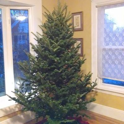 Day 11: Steadfast - like an ever green tree Rethinkchristmas Rethinkchurch Advent Adventphotoaday tree