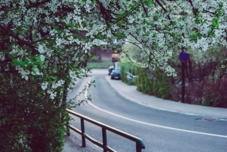SONY DSC Plant Nature Day Growth Outdoors Bosnia And Herzegovina Bosnia Sarajevo Flower Flower Head Springtime Spring Spring Flowers Transportation Tree Road Mode Of Transportation The Way Forward Direction Land Vehicle Symbol Road Marking Motor Vehicle Marking Focus On Foreground Sign Car Railing Diminishing Perspective Crash Barrier Dividing Line