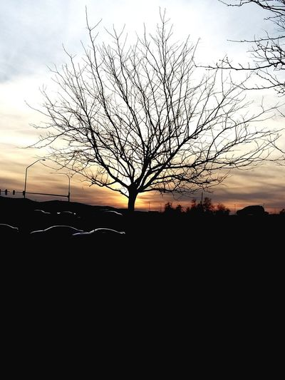 Sunset Silhouette Bare Tree Beauty In Nature Sky Tree Nature Outdoors No People Branch Day Scenics Perspectives On Nature Be. Ready.