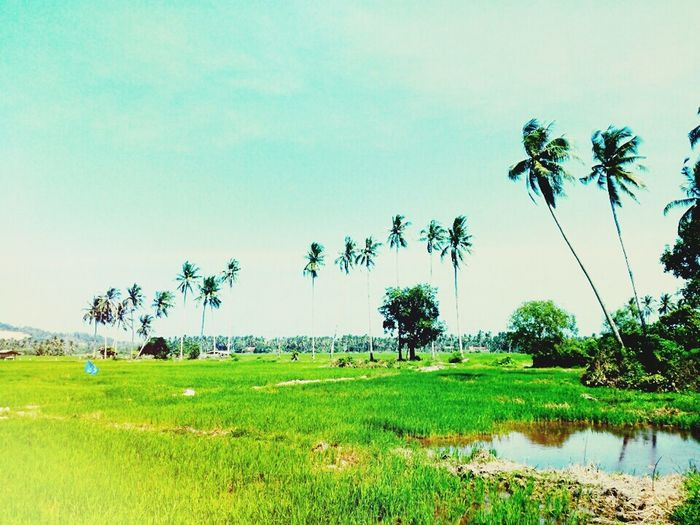 Paddy Is Life Love Nature Single ♥