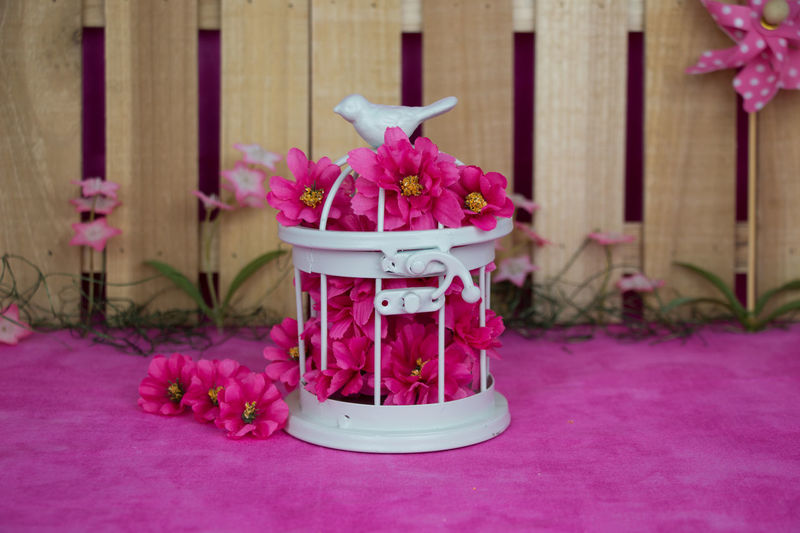 Spring backdrop with birdcage Bird Cage Close-up Day Flower Flower Head Focus On Foreground Fragility Freshness Indoors  Nature No People Petal Pink Color Purple