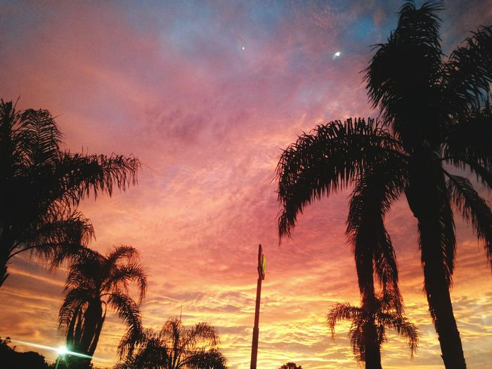 Fire in the skies Tree Palm Tree Sunset Dramatic Sky Sky Cloud - Sky Nature Silhouette Scenics Tranquility Beauty In Nature No People Tree Trunk Outdoors Galaxy Vacations Night Colors Rainbows Sky Clouds Rainbowsky Florida Florida Life Florida Sunset Florida Nature Florida Skies