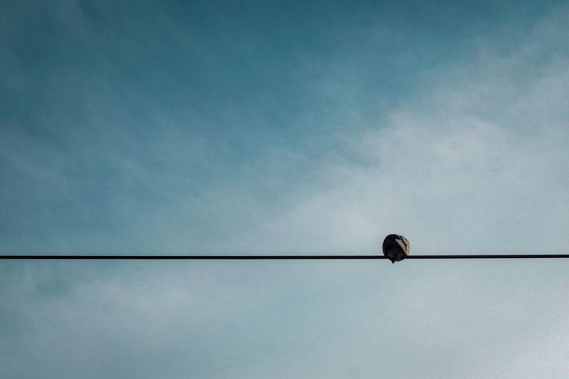 Bird Perching Technology Telephone Line Electricity  Cable Silhouette Power Supply Animal Themes Sky Power Line  Raven - Bird Songbird  Bluetit Sparrow Cardinal - Bird