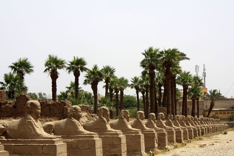 Egypt Kairo Luxor Nil River Palmen Pharao Trockenheit Afrika Ancient Ancient Civilization Day History In A Row No People Old Ruin Outdoors Palm Tree Religion Sculpture Sky Spirituality Statue Tempel The Past Travel Destinations Tree Ägypten