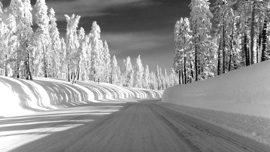Road amidst snow covered plants against sky
