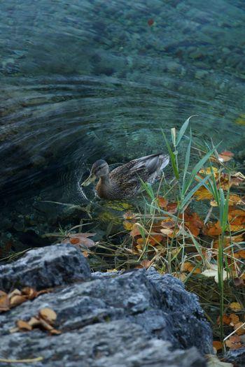 High angle view of bird on rock at lake