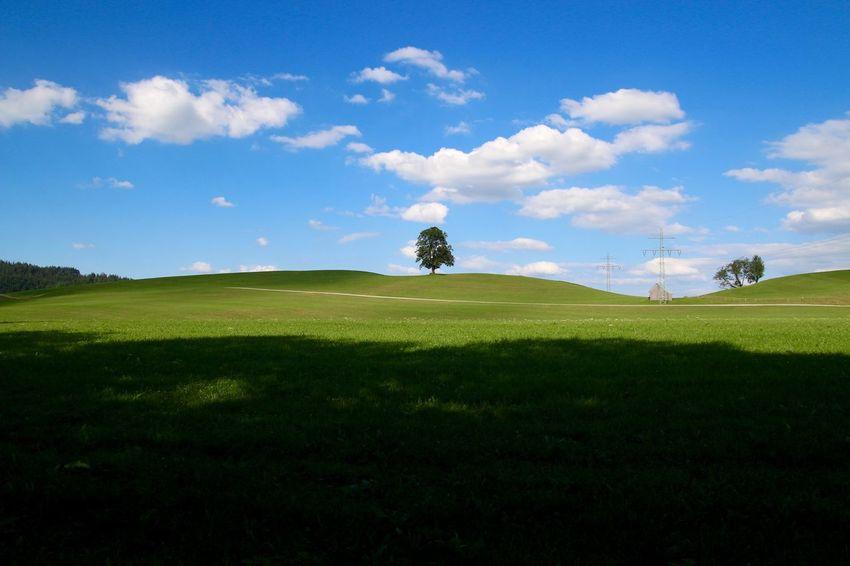 Landscape_Collection Landscape_photography TreePorn Sky Clouds Landscapes