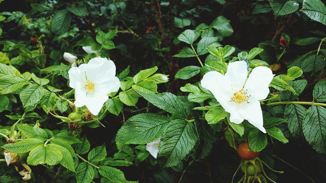 Summer Summertime England St Anne's Lythamstannes Uk Flowers Nature Beauty